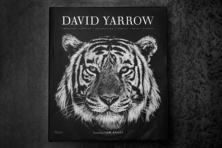 Front cover image of David's latest book showing a tiger